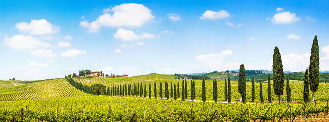 Foto auf AluDibond Toskana Beautiful landscape with vineyard, Chianti, Tuscany, Italy