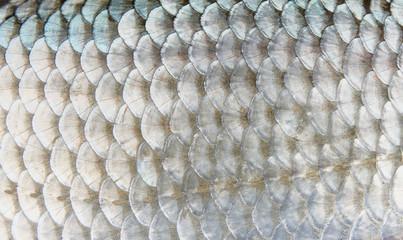 Macro shot of roach scales