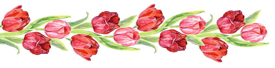 Border tulips