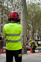 abattage d'un platane à Paris