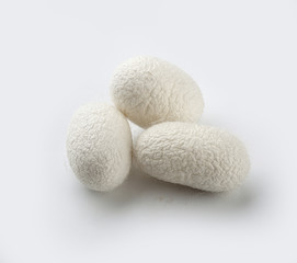 Silkworm's cocoon