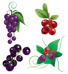 Berries. Ягоды