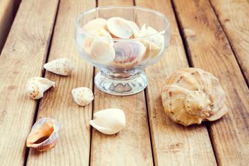 Seashells over wooden background