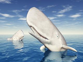 Weiße Wale