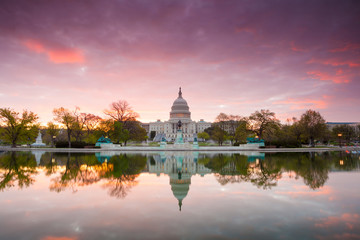 Wall Mural - The United States Capitol building in Washington DC, sunrise