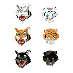 Collection face tiger