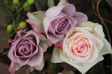 big pink and purple roses