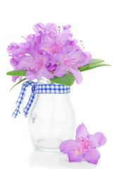 A rhododendron flower blossom in a glass jug vase