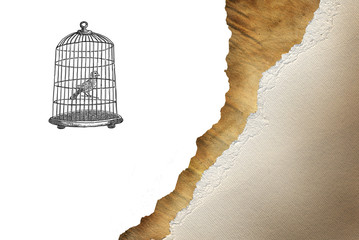 Recess Fitting Birds in cages Bird cage with bird drawn in retro style