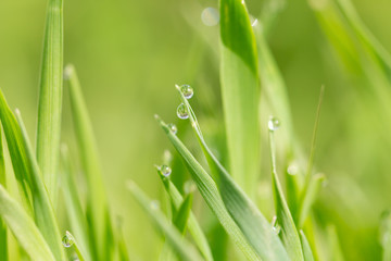 drops of water on the grass after the rain. macro