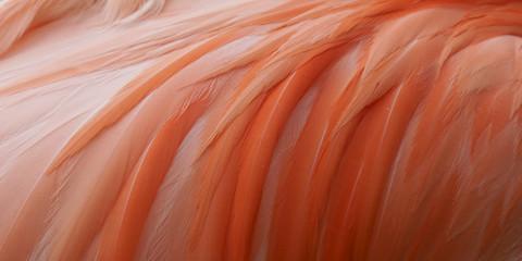 Close-up roze flamingo