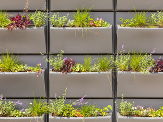Wall with rows of plastic baskets filled with plants