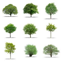 lot d'arbres détourés sur fond blanc
