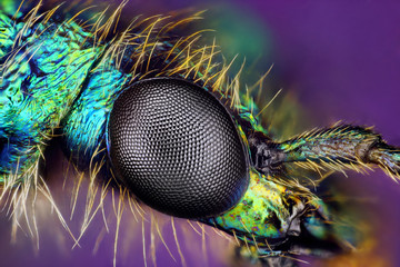 Extreme sharp closeup of compound eye of insect