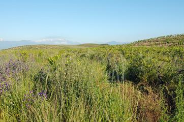 Corse, plaine orientale