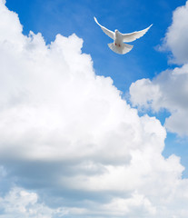 Wall Mural - White dove flying in the sky