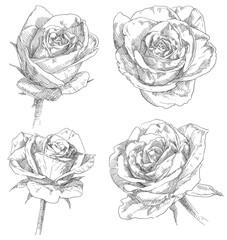 Hand drawing flower blossom