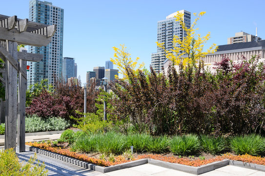 Green Roof against city skyline