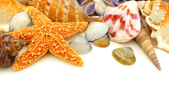 Colorful seashell border on a white background
