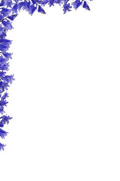 Blue flowers corer border