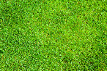 Green grass, natural background