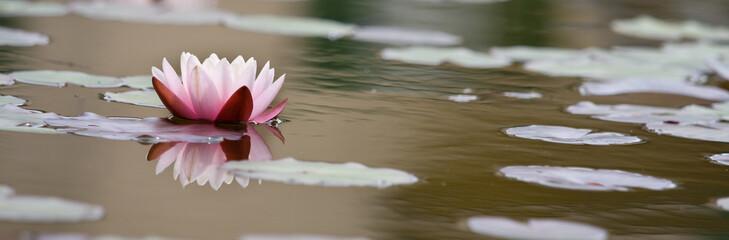 Lotusblüte Banner Hintergrund