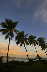 Silhouette of palm trees at sunrise, Las Galeras beach