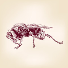 bee insect, hornet vector llustration