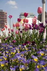 Fotobehang Begraafplaats Tulpen