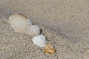 Group of shells at the beach