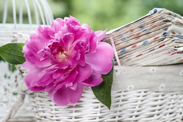 Single pink peony flower in white wicker basket on rustic wooden