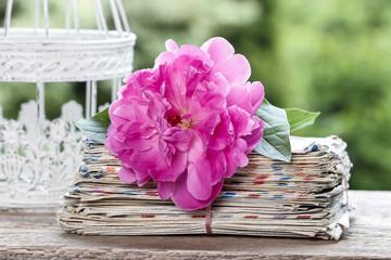 Single pink peony flower in white wicker basket on rustic wooden