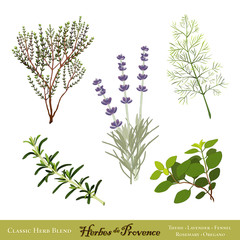 Herbes de Provence: Lavender, Rosemary, Thyme, Fennel, Oregano
