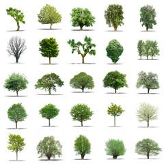 lot d'arbres sans feuilles sur fond blanc en haute définition
