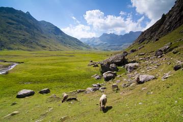 Aguas Tuertas. Pirineos. Huesca.