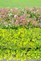 ornamental plants on green grass lawn