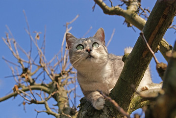 Cat climbing on the tree and blue sky on the background