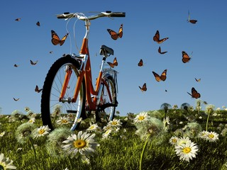 Bicycle and a butterfly