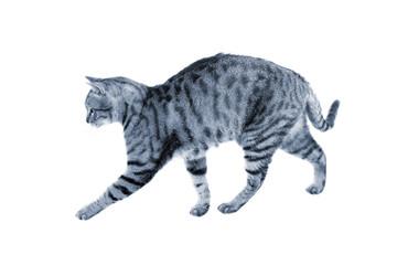 Cat's hunting walk