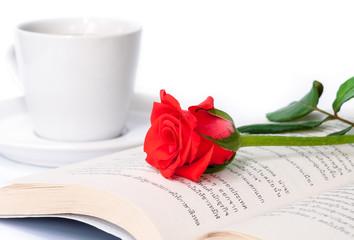 Red rose on the  book.