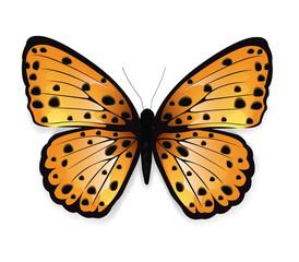 Butterfly Leopard