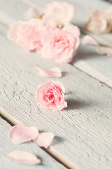 Gentle pink rose on wooden table.