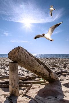 Baumstamm am Strand mit Möwen und Wasser