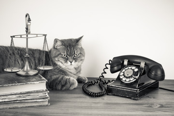 Vintage telephone, British cat, scales, old books on table