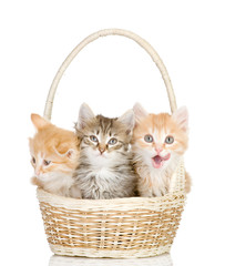 three small kittens in a basket. isolated on white background
