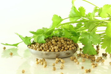 coriander and coriander seeds