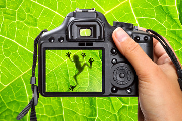 Photography of the tree frog