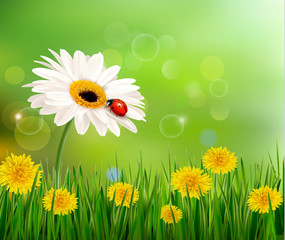Wall Mural - Summer nature background with ladybug on white flower. Vector.
