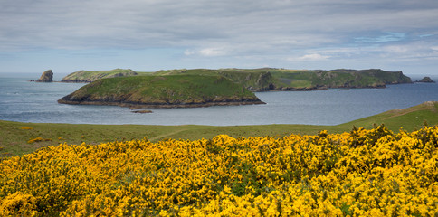 Skomer Island Wales known for Puffins