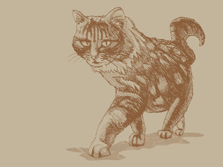 Approaching cat, perspective - illustration